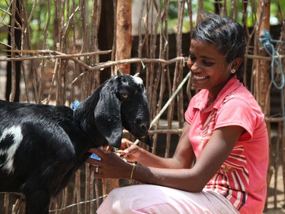 1-goat-crop
